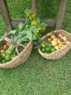 Harvest Basket Our Kitchen Garden